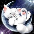 avatar_SnowLeopard